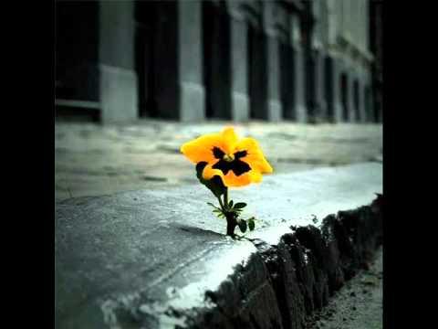 fleur béton